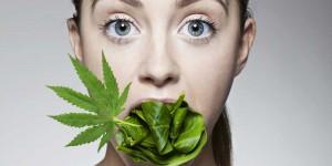 GreenWay Maine Passage of Marijuana Laws Contribute to Lowered Obesity